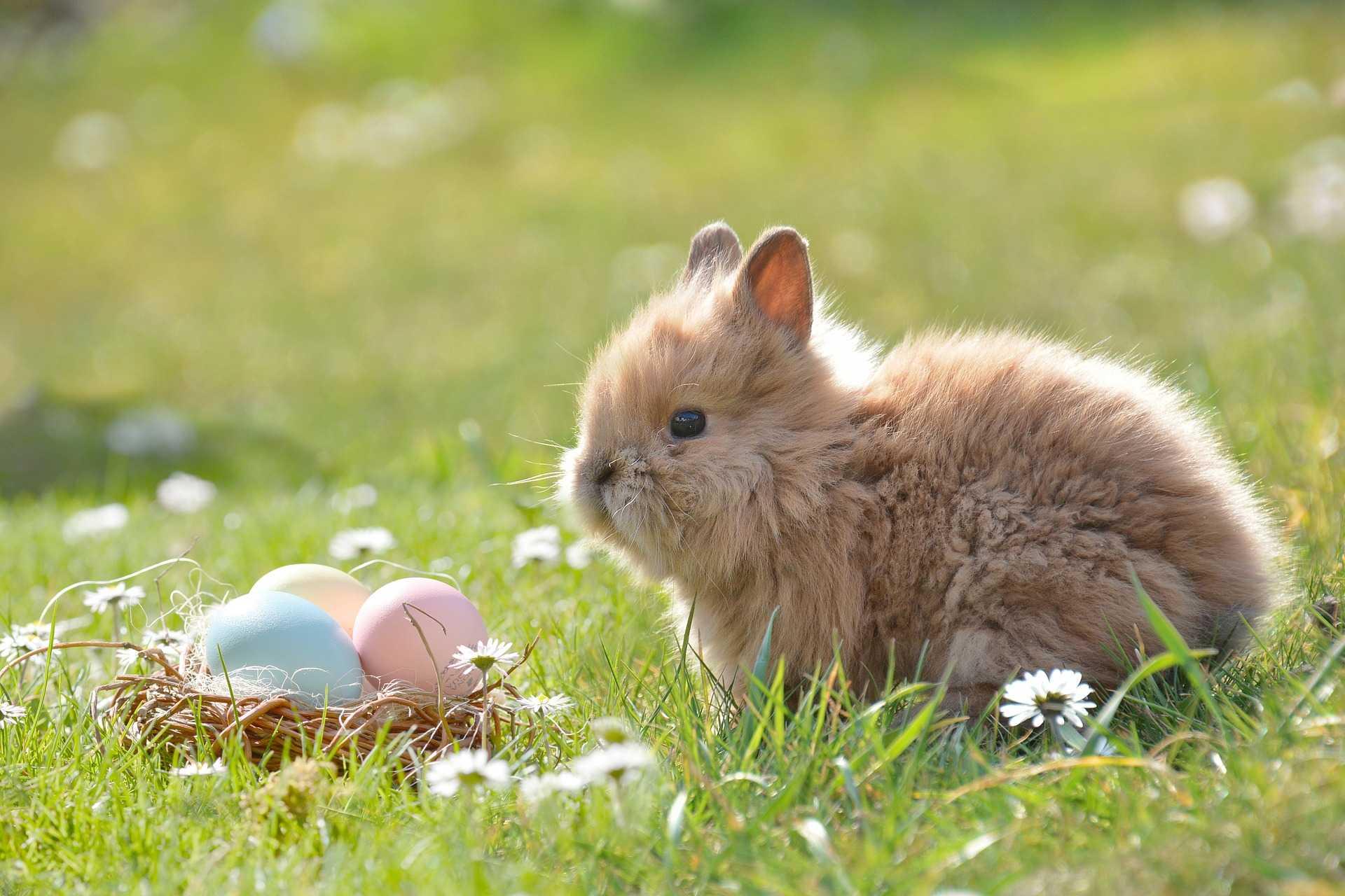 รู้จักธรรมชาติของกระต่าย